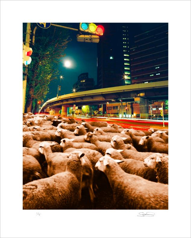 Scott Lickstein - A New Herd - 2011